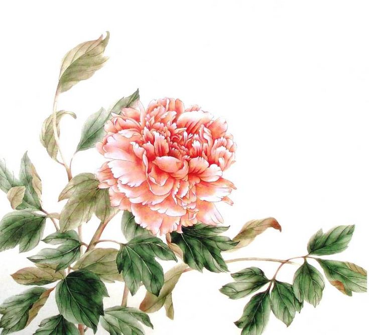 Peinture chinoise mogu : pivoine