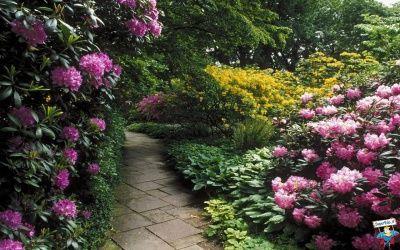 Giardini Botanici 34