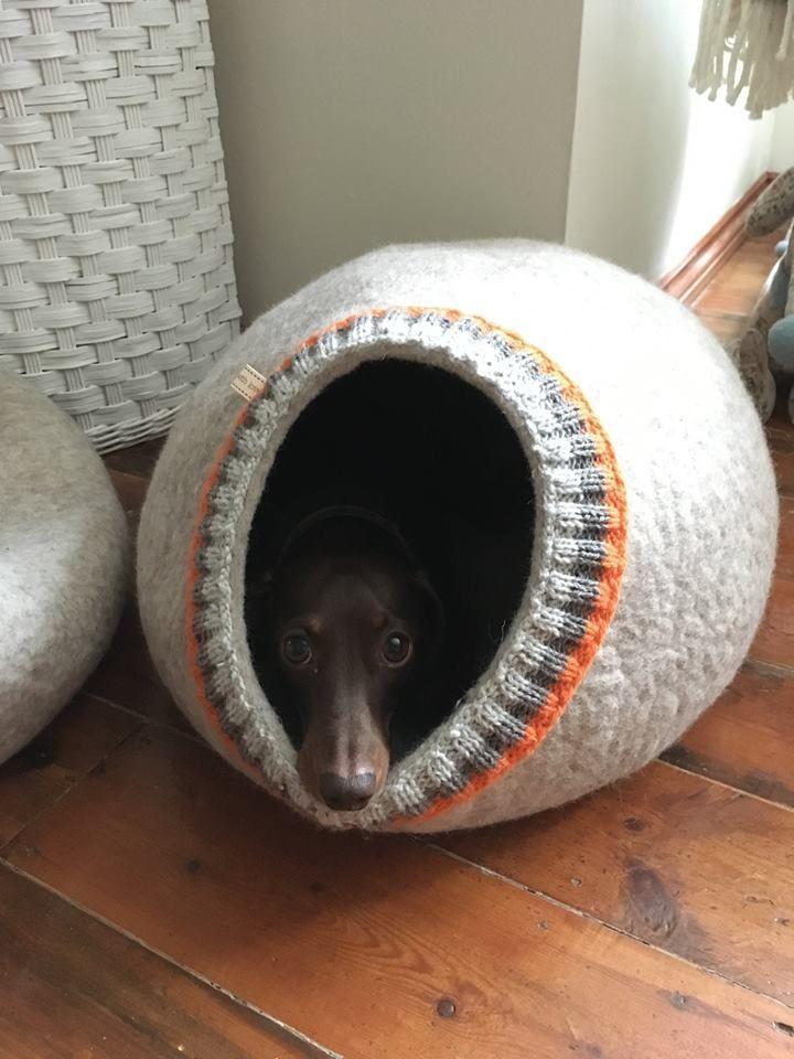 Cuccia Per Cani In Feltro Grotta In 2020 Diy Dog Bed Dog Beds