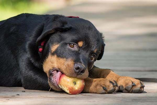 Determine Even More Details On Rottweilers Look Into Our