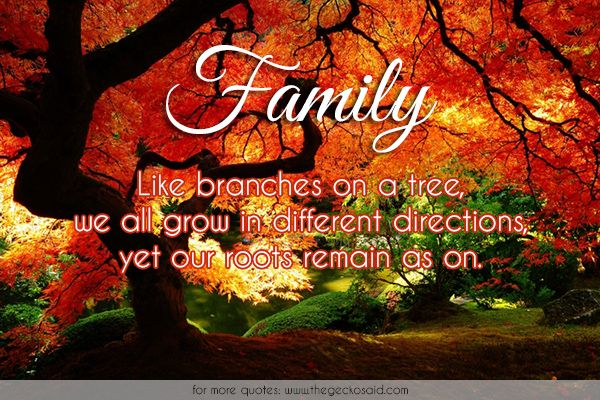 Family. Like branches on a tree, we all grow in different directions, yet our roots remain as on.  #branches #different #directions #family #grow #one #quotes #remain #roots #tree  ©2016 The Gecko Said – Beautiful Quotes
