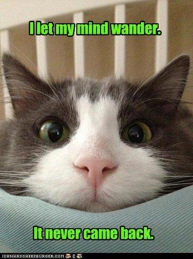 Do cats ponder their existence? - Quora