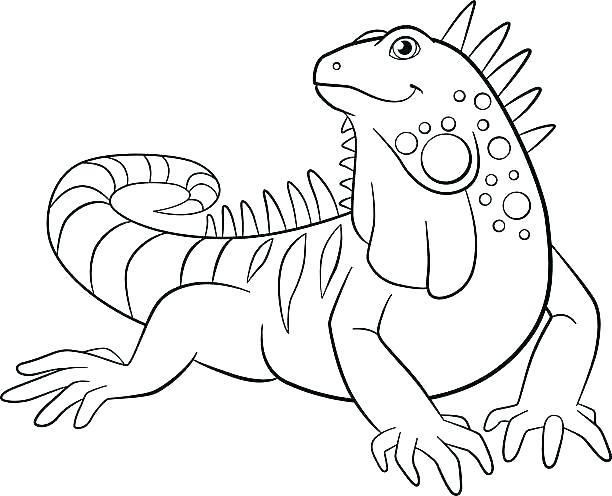 Iguana Coloring Pages Creative Cuties Iguana Coloring Page