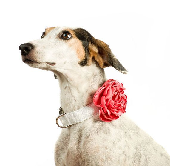 Wedding Dog Collar Flower - Coral Satin on Etsy, 24,22 $ CAD