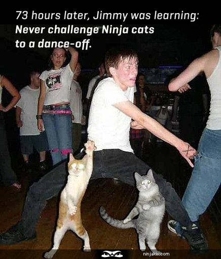 Never challenge Ninja cats to a dance-off.