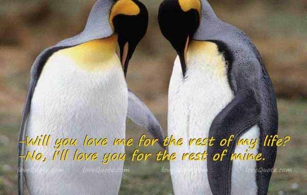 Love Quotes About Penguins | penguin love quotes image search results