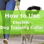 An Electric Dog Training Collar is definitely the best suitable collar for couching your dogs. Read more about it now!! #electricdogcollar #dogtrainingcollar #doglovecollar