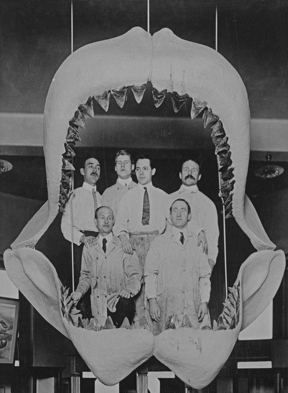 Paleontology staff posing with Fossil Shark Jaws.  American Museum of Natural History.