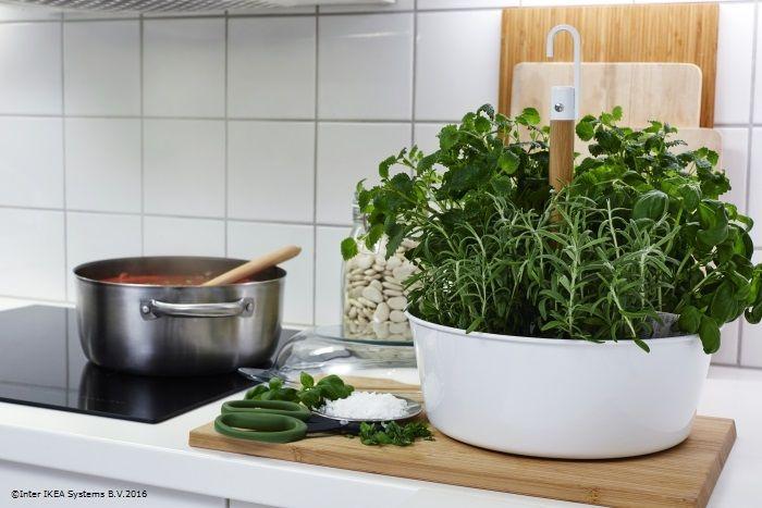 Câteva mirodenii din ghiveci te ajută să dai un gust proaspăt fiecărei mese. #gatestiusor