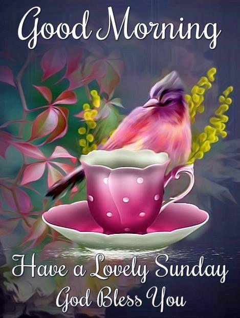 Good Morning God Bless You Sunday Blessings Morning Blessings