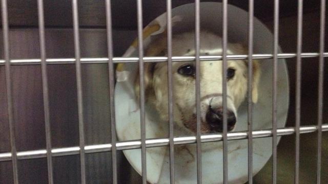 La Stampa - Trapani, salvano un cane che vagava con una freccia nella testa