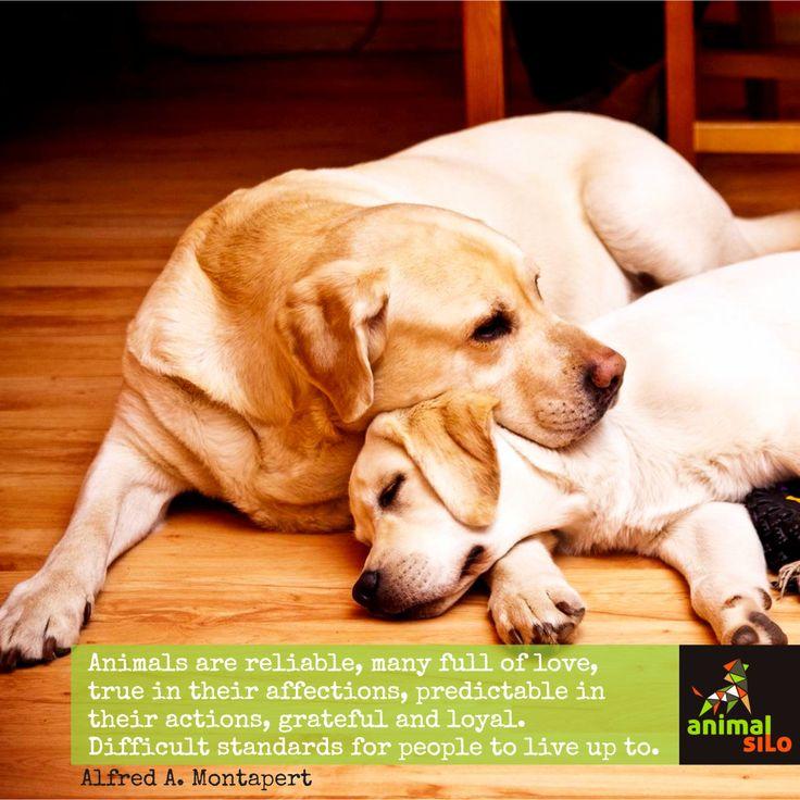AnimalSilo Quotes Shared With ♥ By www.animalsilo.com