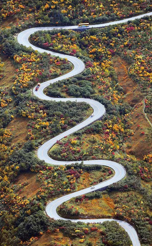 Autumn leaves at Tateyama Kurobe Alpen Route, Toyama, Japan