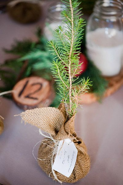 These evergreen trees were given to guests as favors, wrapped in burlap and ready to plant immediately after the wedding!