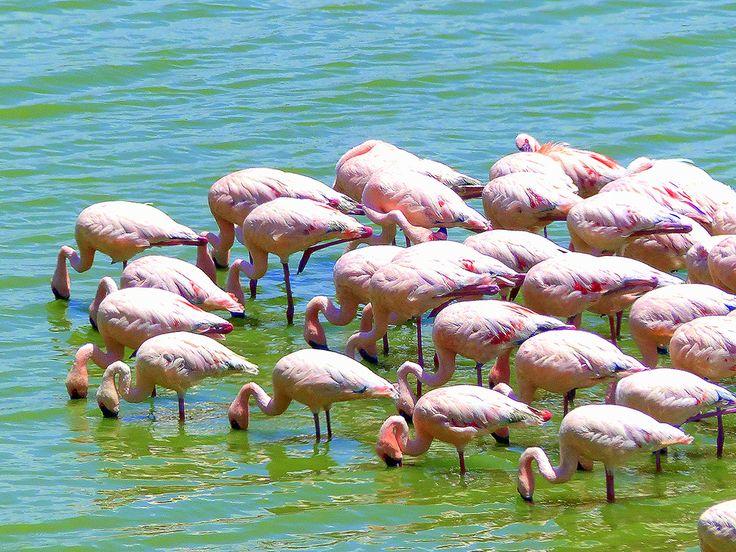 Lake Nakuru, Kenia