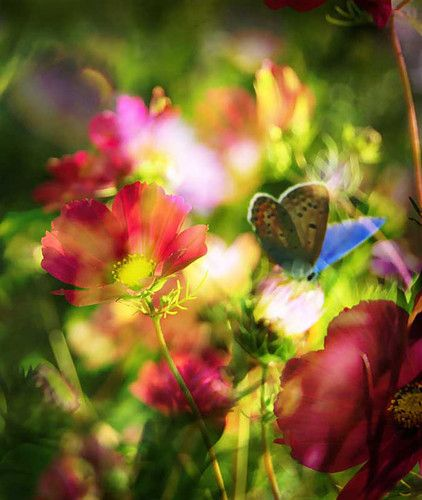 absolutely beautiful!Spring Flower, Butterflies, Red Flower, Gardens, Beautiful Pictures, Flower Photography, Summer Flower, Mornings Lights, Spring Style