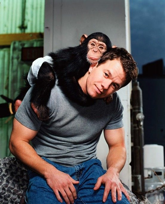 Mark Wahlberg with a baby chimp. AWWWWWWWW!!!!!!!!!!!!