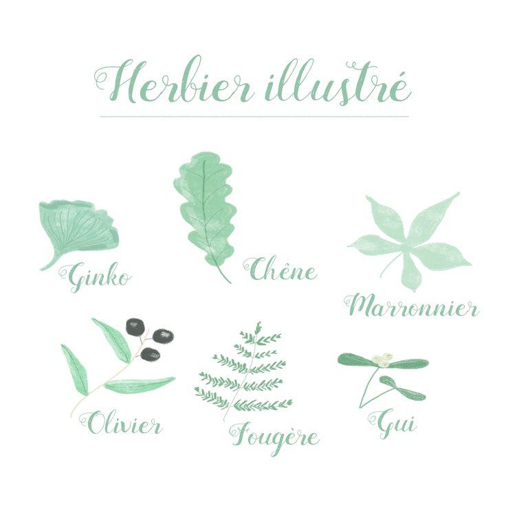Herbier _ Blanc Marion