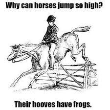 Image result for horse puns captions