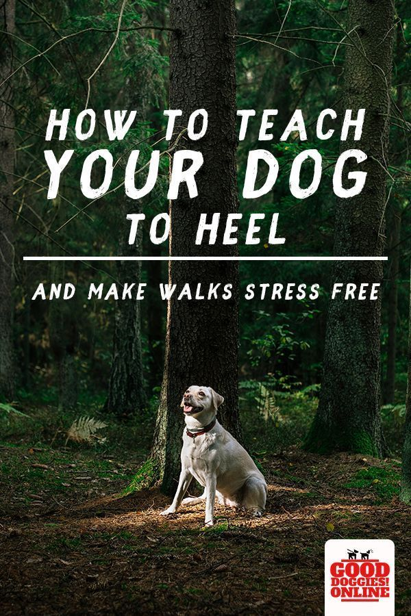 How Teaching A Dog To Heel Will Make Walks Stress Free Training