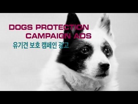 유기 강아지, 고양이 보호 캠페인 Abandoned Dogs & Cats Campaign TV commercial