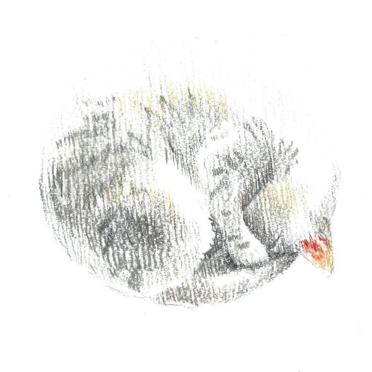 white cat, sleep, сolour pencils, graphic, illustration, белая кошка, кошка спит клубочком, графика, иллюстрация, цветные карандаши.