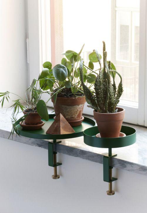Plateau plantes