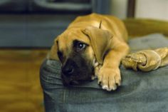 Allergies in Your Pet Dogs and How to Stop It