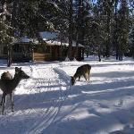 The Lodges on Seeley Lake, Seeley Lake, MT