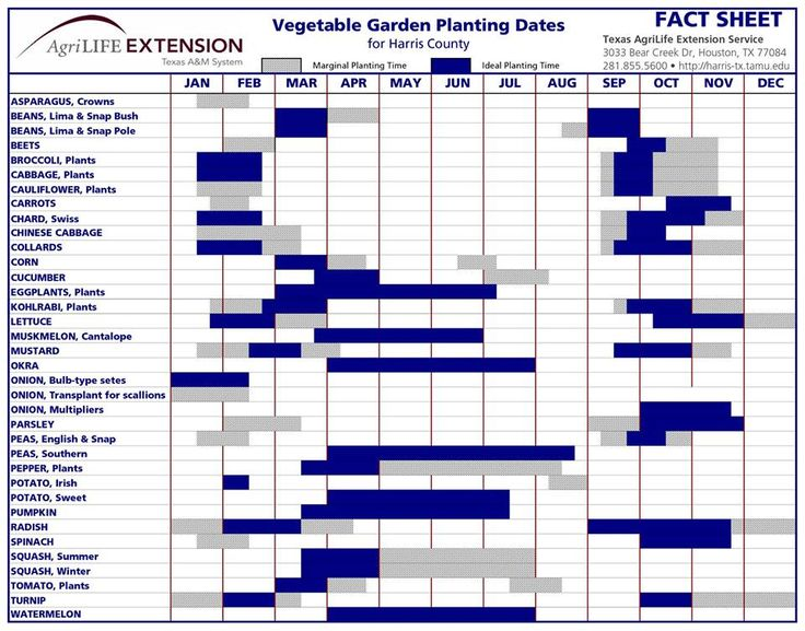 698 Best Home Garden Images On Pinterest Gardening Agriculture And Apartment Gardening