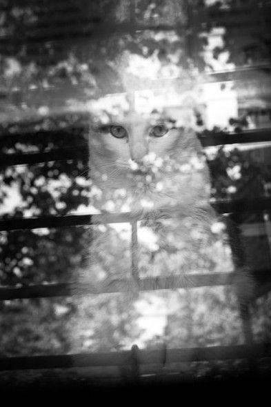 Magic Cat  Reflections in a bodega window