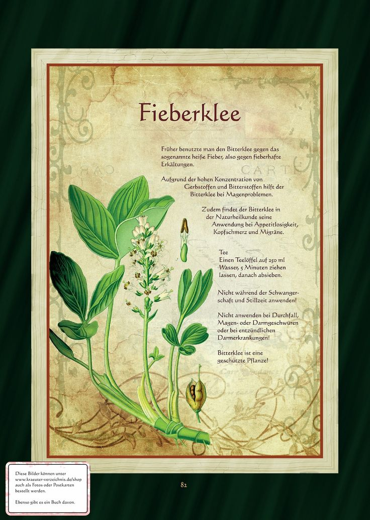 Bitterklee - Fieberklee