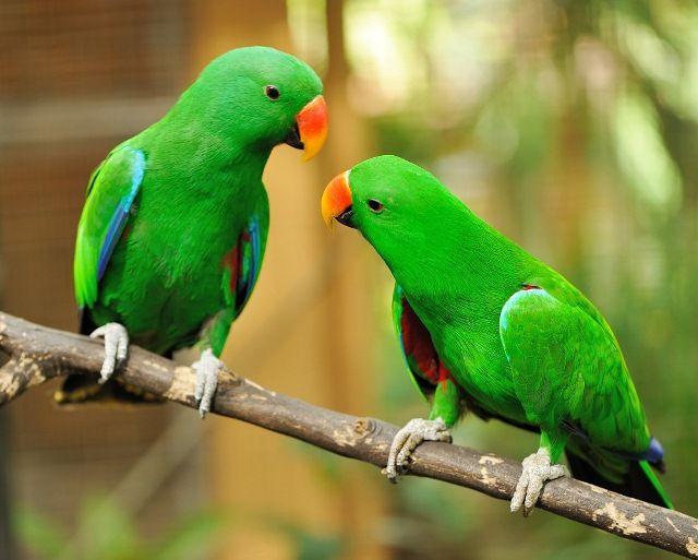 A fogságban tartott madaraknak – éppúgy, mint a szabadban élőknek – fontos anyagokra van szükségük, melyeket a táplálékkal vesznek magukhoz