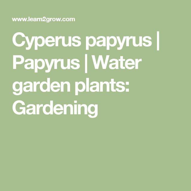 Cyperus papyrus | Papyrus | Water garden plants: Gardening