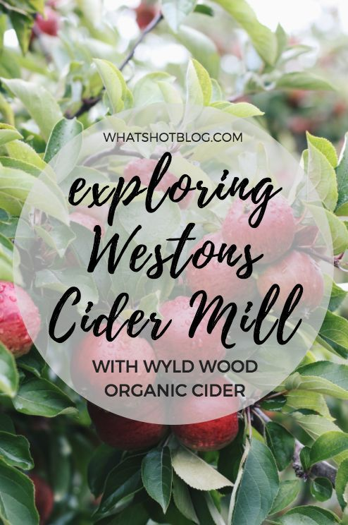 Celebrating organic September with Wyld Wood Organic Cider at Westons Cider Mill in Herefordshire. A tour of the cider mill could be the perfect family day out in England.