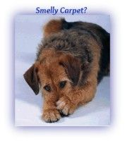 Sharing your home with dogs you have to deal with pet odor. No exception! As a dog owner you don't need to put up with pet odors in your home. You definitely need to have some kind of pet odor remover at hand. Find at Animals Small and Big the list of the Top 3 Pet Odor Removers.