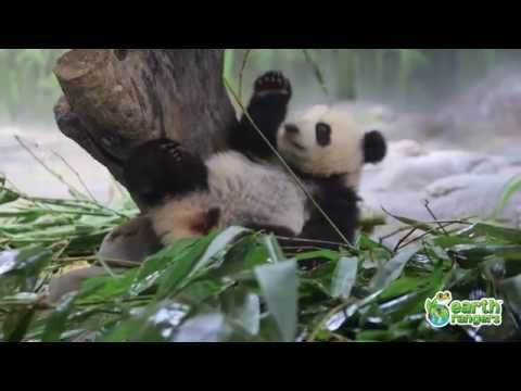 Great brain break! Funny Talking Animals: Episode Two - YouTube