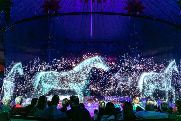 Could This Animal Free Holographic Experience Be The Circus Of The Future Live Animals Hologram Animals Images