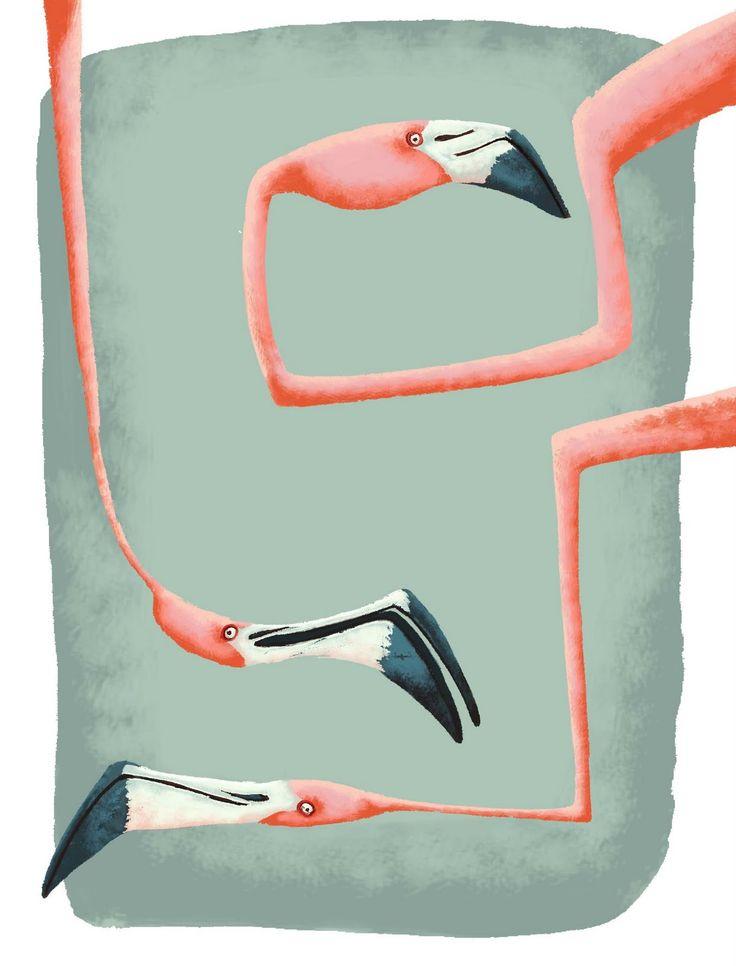fish's aquarium: Flamingos