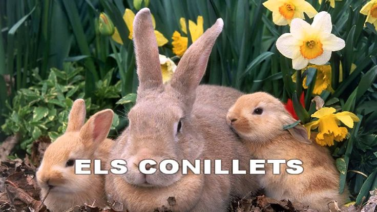 El conillets