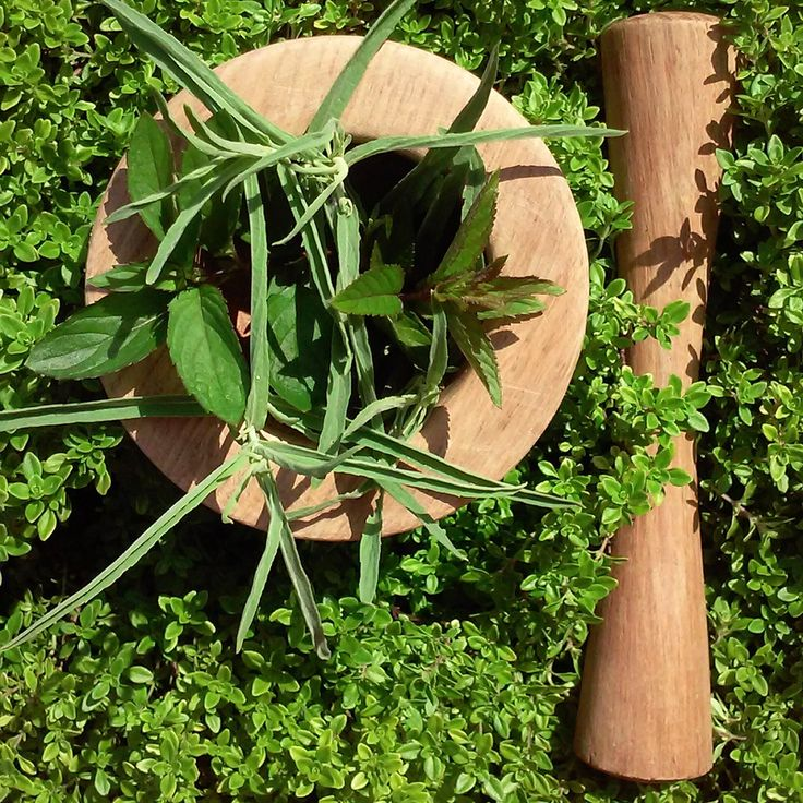 Fresh herbs from our garden