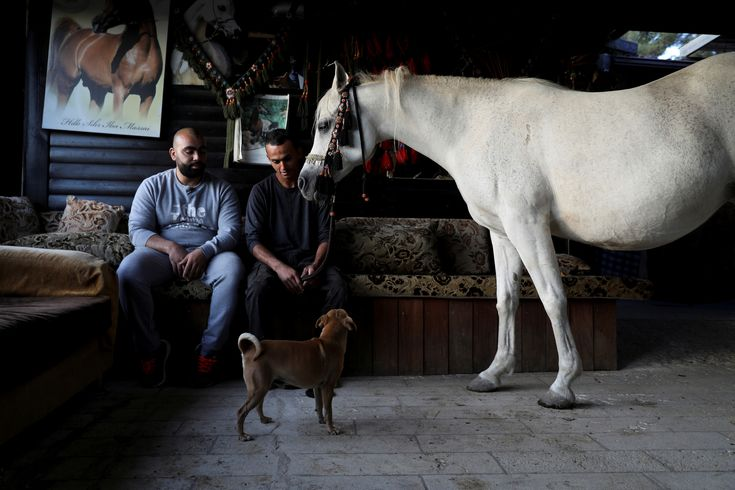 Palestinian horse trader Fares Salem (R) sits next to a friend while his horse stands in his living room in the East Jerusalem neighbourhood of A-tur, November 11, 2017. REUTERS/Ammar Awad via @AOL_Lifestyle Read more: https://www.aol.com/article/lifestyle/2018/01/10/palestinians-in-east-jerusalem-cherish-horses-as-family/23329946/?a_dgi=aolshare_pinterest#fullscreen