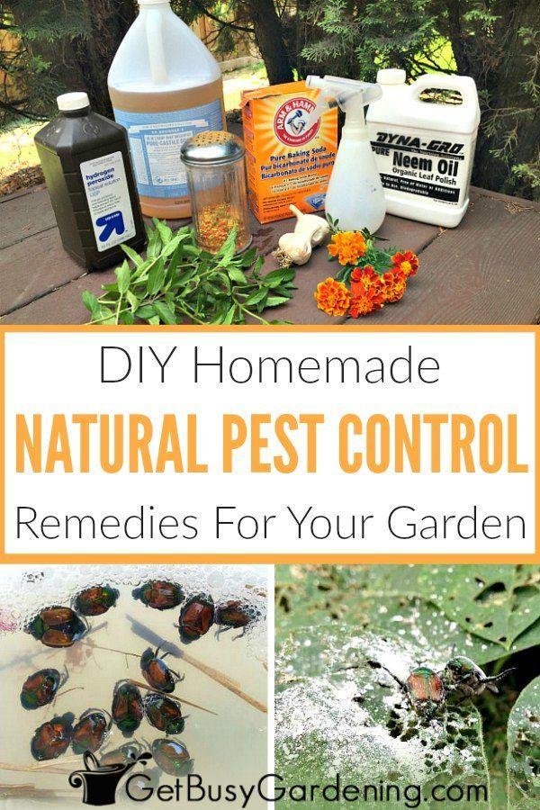 39d60f1ff6332a75093cdac5fb0f0905 - Diy Organic Pest Control For Gardens