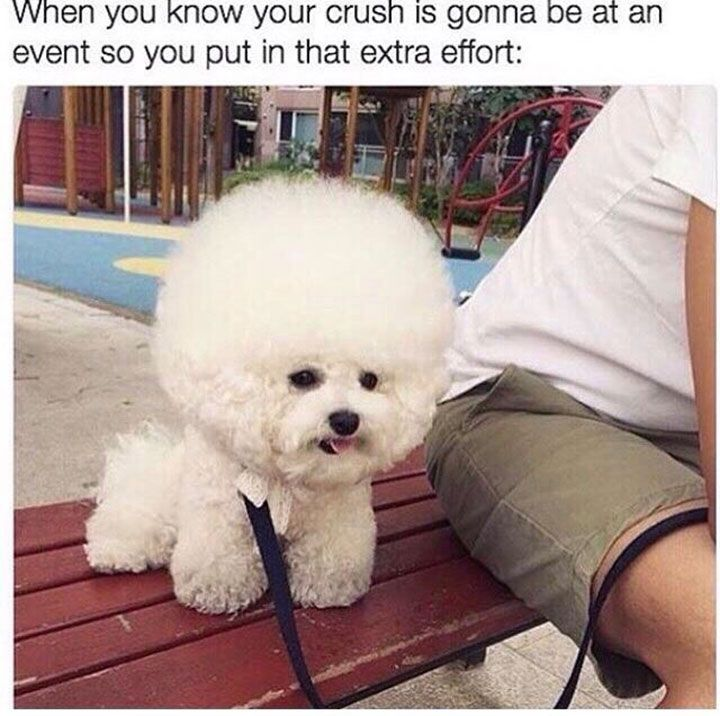 30 Funny Animal Pictures You Really Just Need To See For Yourself