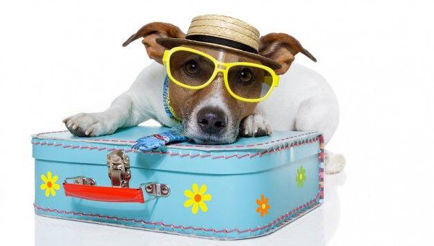 Spesso viaggiare con i nostri amici a quattro zampe non è certo la cosa più semplice del mondo, ma presso gli Space Hotels di sicuro gli animali sono non solo ben accetti ma anche ospiti graditi. Scopri con noi le città di Fido su http://www.stilefemminile.it/vacanze-con-gli-amici-a-quattro-zampe/
