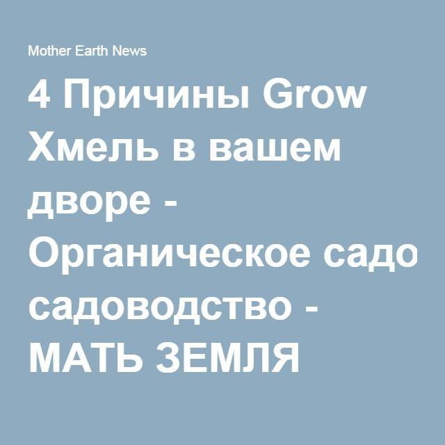 4 Причины Grow Хмель в вашем дворе - Органическое садоводство - МАТЬ ЗЕМЛЯ НОВОСТИ