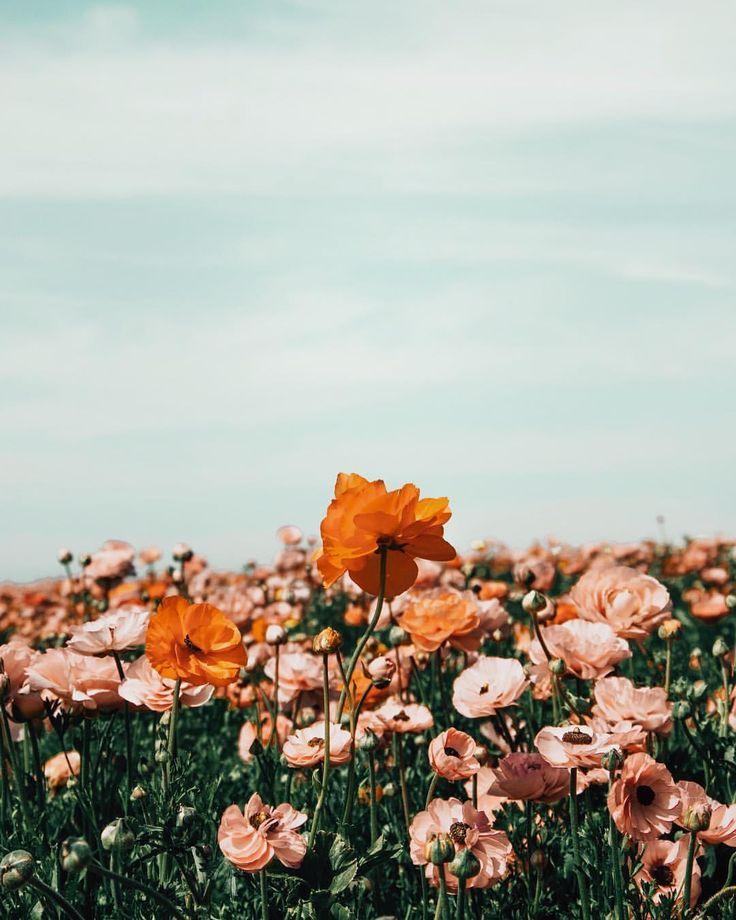 Willkommen in Kalifornien, meinem neuen Desktop-Preset und Action Pack für A Color Story! … blühen und wild   – Blumensträuße