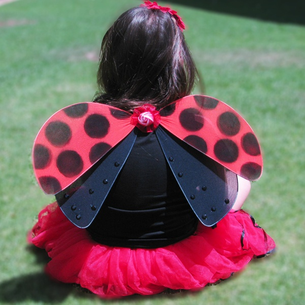 ladybug wings, butterflies and more