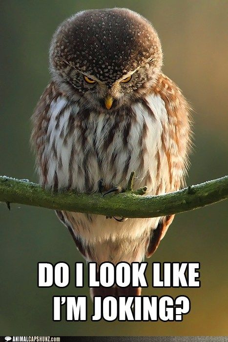 Do I #look #like I'm #joking ? #LetsGetWordy