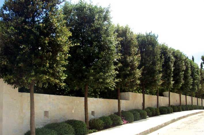 39d796e3cdb8f7087a98e9b8902155ed--quercus-ilex-trees-yard-ideas Narrow Backyard Design Ideas on tiny backyard design ideas, narrow landscape ideas, sloped backyard design ideas, side yard landscaping ideas, narrow pool ideas, small backyard ideas, simple backyard design ideas, modern backyard design ideas, cheap backyard design ideas, low-budget backyard ideas, big backyard design ideas, narrow patio ideas, traditional backyard design ideas, medium garden design ideas, large backyard design ideas,